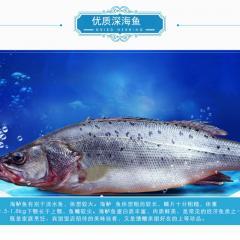 海鲈鱼礼盒活动装(三盒装)